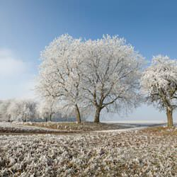 Frost covering trees and a grassy field in Grosse Isle